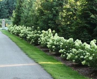 Elegant Colorful Bobo Hydrangea Garden Landscaping Ideas12