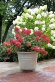 Elegant Colorful Bobo Hydrangea Garden Landscaping Ideas19