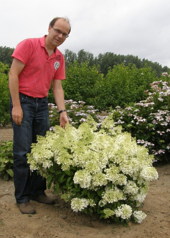 Elegant Colorful Bobo Hydrangea Garden Landscaping Ideas21