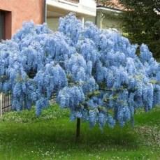 Elegant Colorful Bobo Hydrangea Garden Landscaping Ideas35