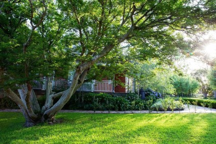 Amazing Big Tree Landscaping Ideas02