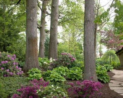 Amazing Big Tree Landscaping Ideas04