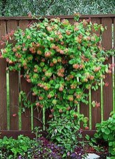 Beautiful Evergreen Vines Ideas For Your Home28