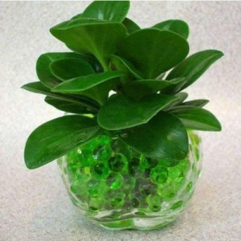 Inspiring Cool Water Beads For Indoor Decoration21