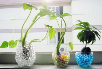 Inspiring Cool Water Beads For Indoor Decoration34