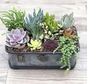 Cheap Succulent Plants Decor Ideas You Will Love01