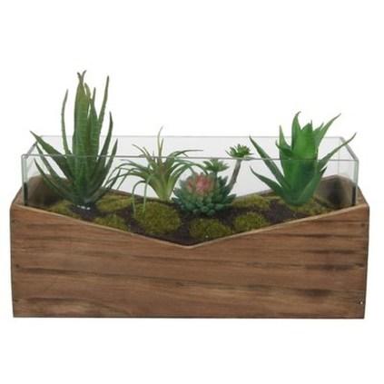 Cheap Succulent Plants Decor Ideas You Will Love14