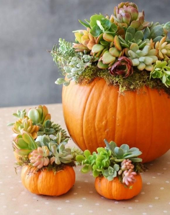 Cheap Succulent Plants Decor Ideas You Will Love19