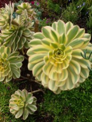 Cheap Succulent Plants Decor Ideas You Will Love24