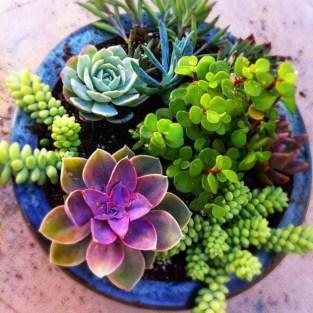 Cheap Succulent Plants Decor Ideas You Will Love29
