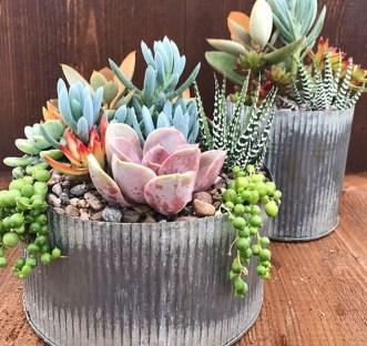 Cheap Succulent Plants Decor Ideas You Will Love30