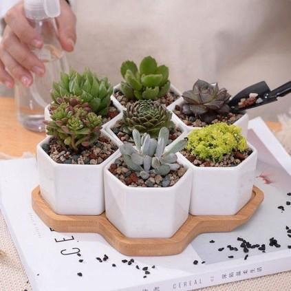 Cheap Succulent Plants Decor Ideas You Will Love31