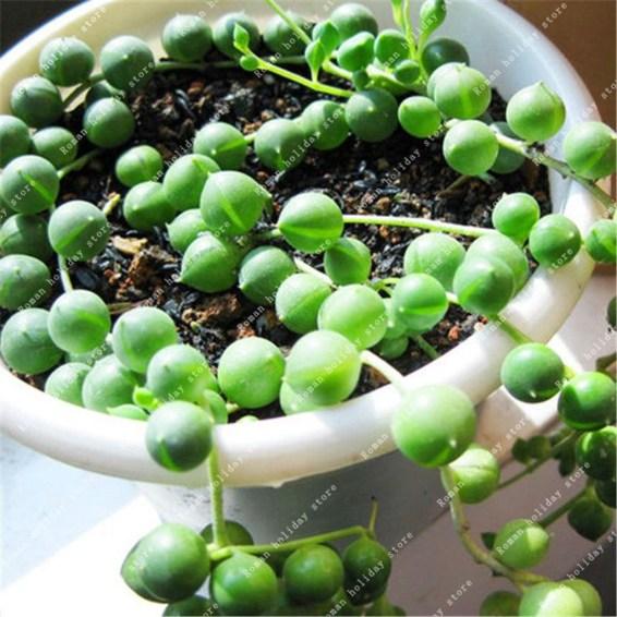 Cheap Succulent Plants Decor Ideas You Will Love37