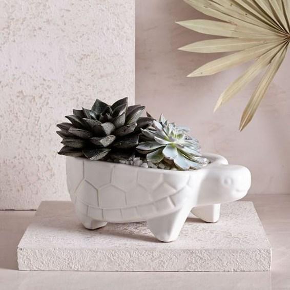 Cheap Succulent Plants Decor Ideas You Will Love38