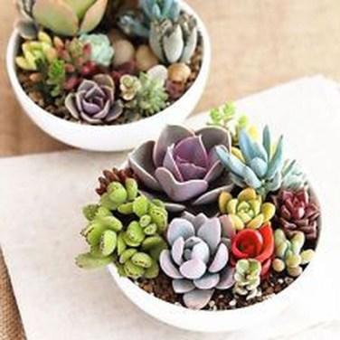 Cheap Succulent Plants Decor Ideas You Will Love42