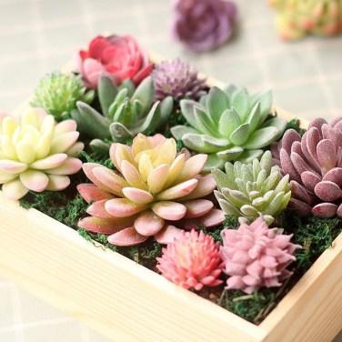 Cheap Succulent Plants Decor Ideas You Will Love43