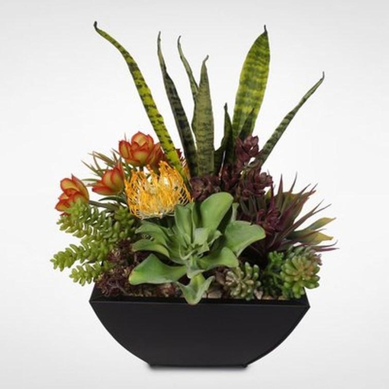 Cheap Succulent Plants Decor Ideas You Will Love44
