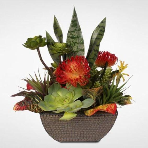 Cheap Succulent Plants Decor Ideas You Will Love49