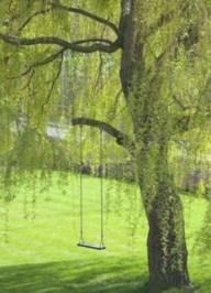 Amazing Big Tree Landscaping Ideas37