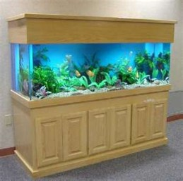 Awesome Aquarium Partition Ideas09