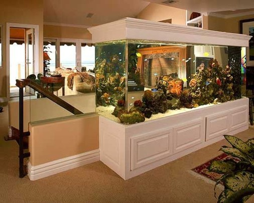 Awesome Aquarium Partition Ideas15