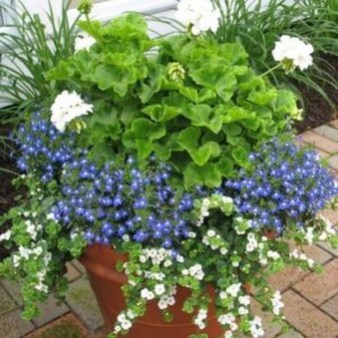 Best Plant For Your Garden On Summer12