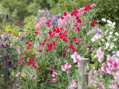 Best Plant For Your Garden On Summer35