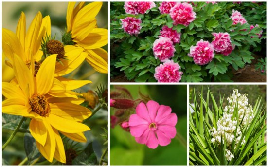 Best Plant For Your Garden On Summer42