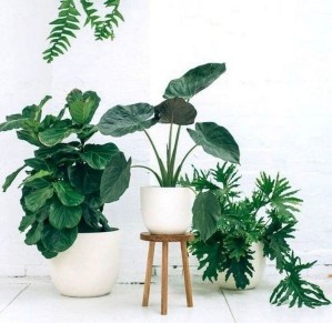 Lovely Display Indoor Plants11