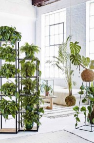 Lovely Display Indoor Plants13