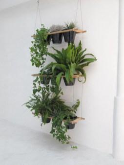 Lovely Display Indoor Plants17