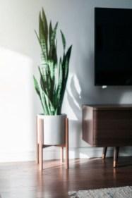 Lovely Display Indoor Plants20