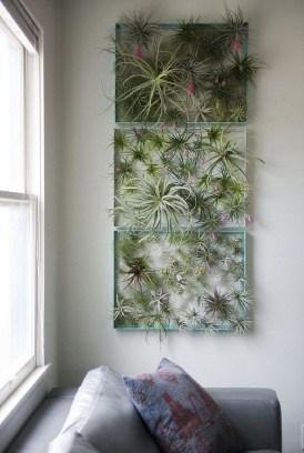 Lovely Display Indoor Plants25