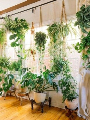Lovely Display Indoor Plants27
