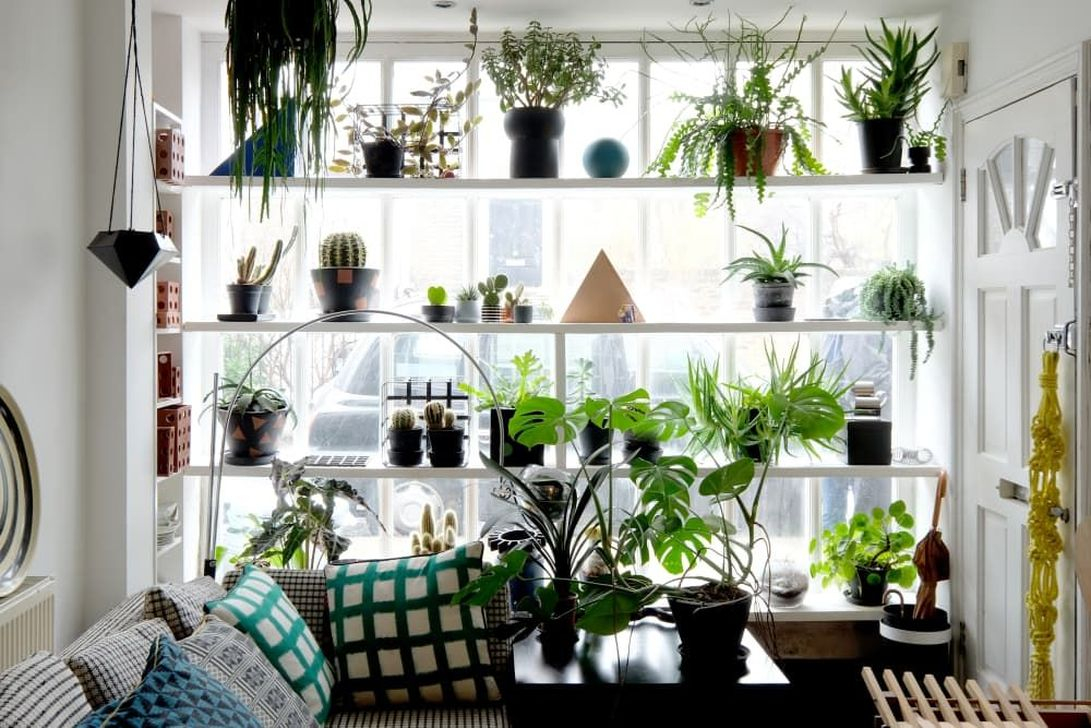 Lovely Display Indoor Plants29