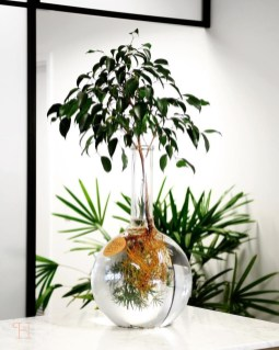Lovely Display Indoor Plants33