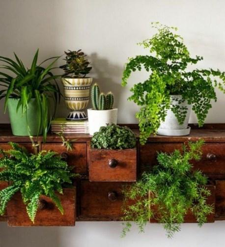 Lovely Display Indoor Plants37