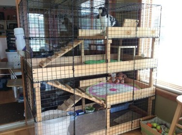 Unique Diy Pet Cage Design Ideas You Have To Copy17