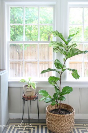 Awesome Indoor Plant Decoration Ideas To Make Natural Comfort In Your Home06