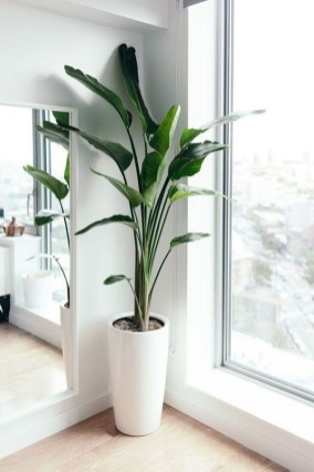 Awesome Indoor Plant Decoration Ideas To Make Natural Comfort In Your Home07