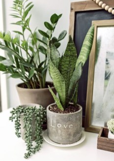 Awesome Indoor Plant Decoration Ideas To Make Natural Comfort In Your Home19