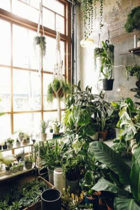 Awesome Indoor Plant Decoration Ideas To Make Natural Comfort In Your Home25
