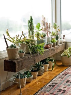 Awesome Indoor Plant Decoration Ideas To Make Natural Comfort In Your Home28