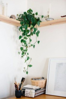 Awesome Indoor Plant Decoration Ideas To Make Natural Comfort In Your Home38