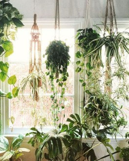 Awesome Indoor Plant Decoration Ideas To Make Natural Comfort In Your Home40