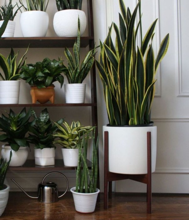 Awesome Indoor Plant Decoration Ideas To Make Natural Comfort In Your Home46