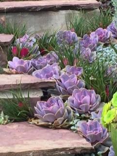 Gorgeous Succulent Garden Ideas For Your Backyard03