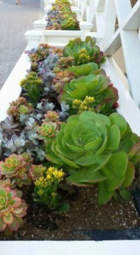Gorgeous Succulent Garden Ideas For Your Backyard30