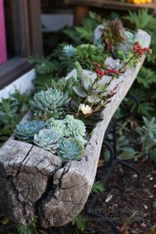 Gorgeous Succulent Garden Ideas For Your Backyard39