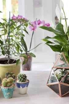 Indoor Garden Design For Easy And Cheap Home Ideas14